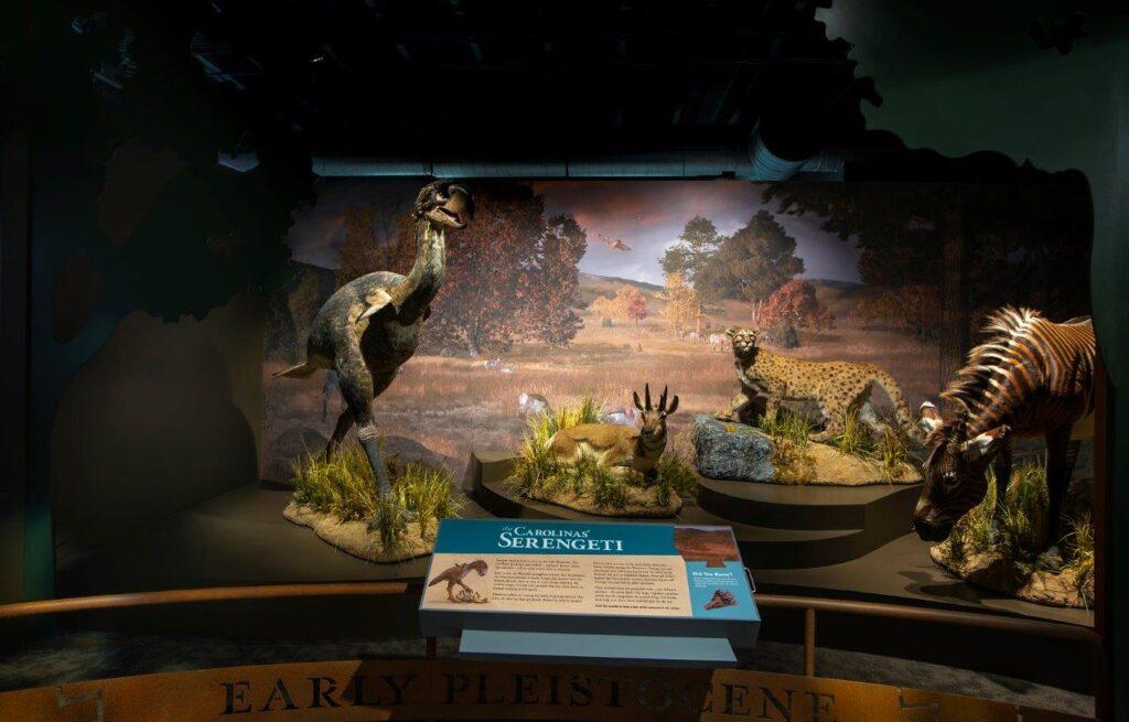 2 Ice Age Carolinas b1_Early Pleistocene